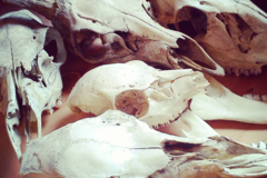 Experiences: Finding and Identifying  Bones, Feathers, Shells, Etc.