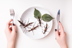 Experiences: Fear Factor: Let's eat insects!