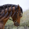 Experiences: Equestrian Experience: Get to know a horse