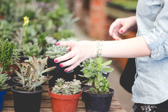 Experiences: Selling Succulent Plants